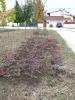 Növény 2009_11