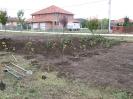 Növény 2009_12