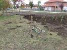Növény 2009_13