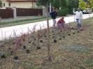 Növény 2009_3