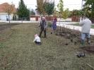 Növény 2009_4