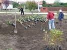 Növény 2009_5