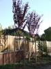 Kanyar fák 2012_6